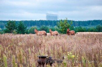 Deux-, trois-, quatre-, cinq- et sept jours de visite dans la zone de Tchernobyl et la ville de Pripyat